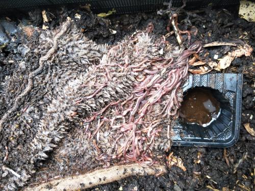 過濾棉給蚯蚓