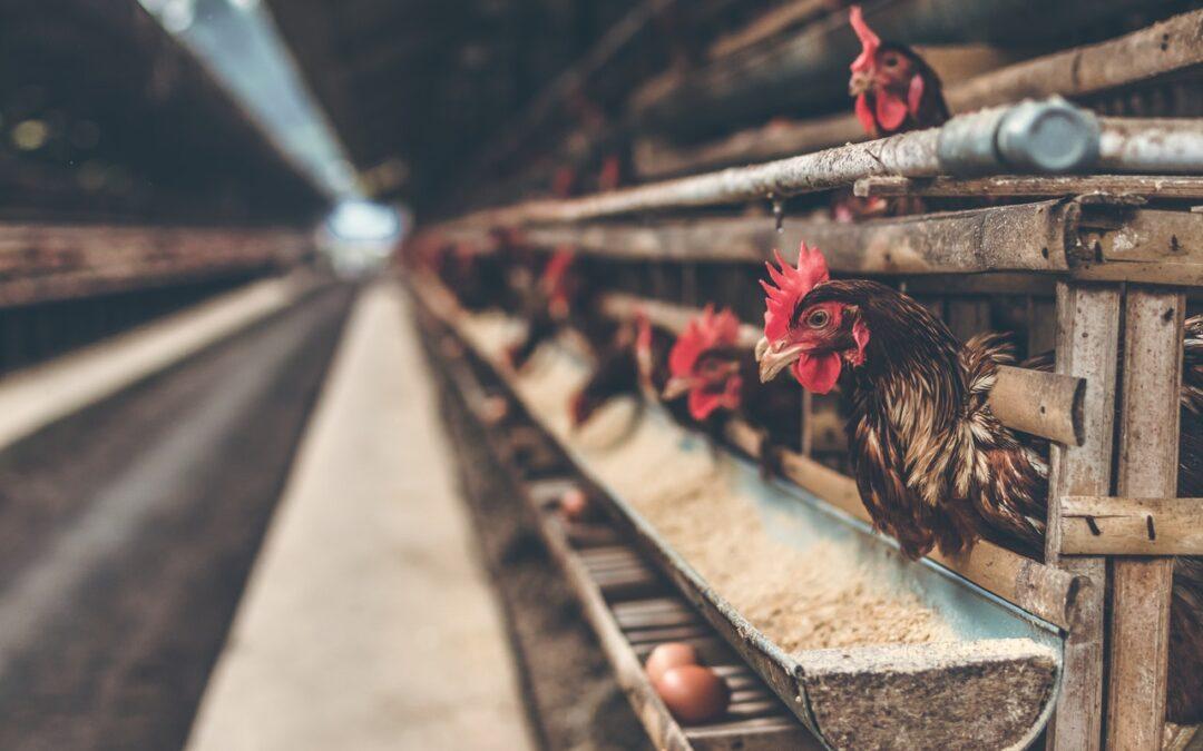 平飼雞場與自然農法的 Wish