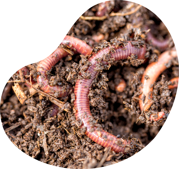 A-Worm 蟲蟲救地球
