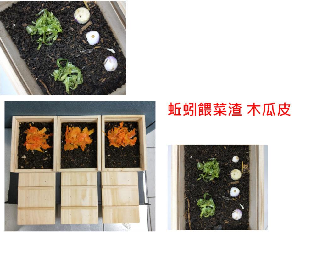 蚯蚓吃菜渣及木瓜皮